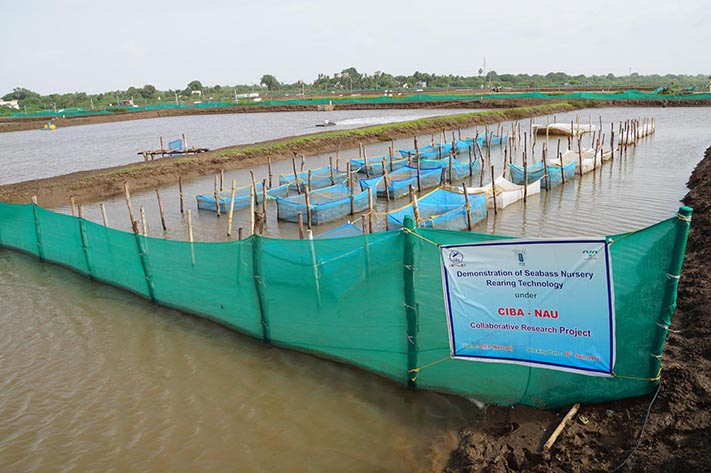 Seabass nursery rearing demonstration at Onjal village, Navsari, Gujrat
